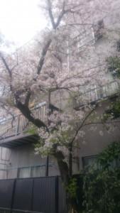 4月17日ブログ 写真